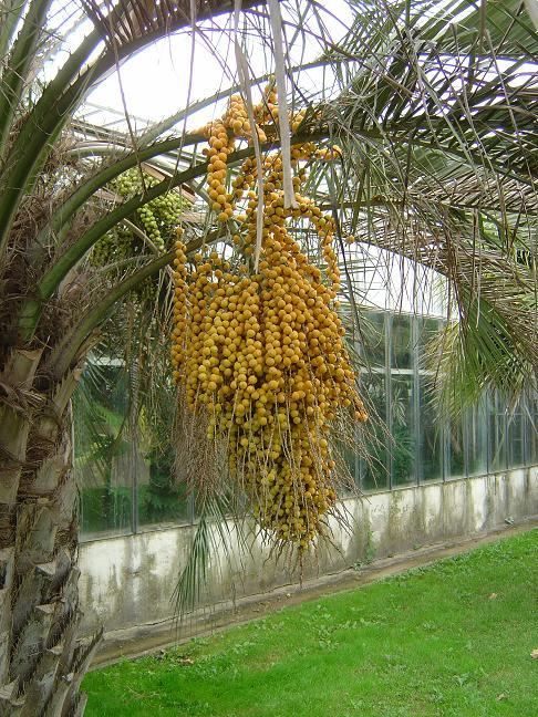 Le parc municipal olbius riquier hy res les palmiers for Jardin olbius riquier