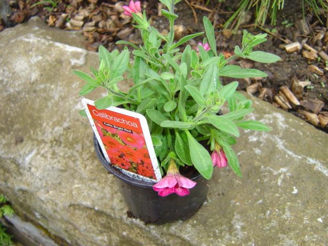Jolies jardinières façade fleurie mode d'emploi