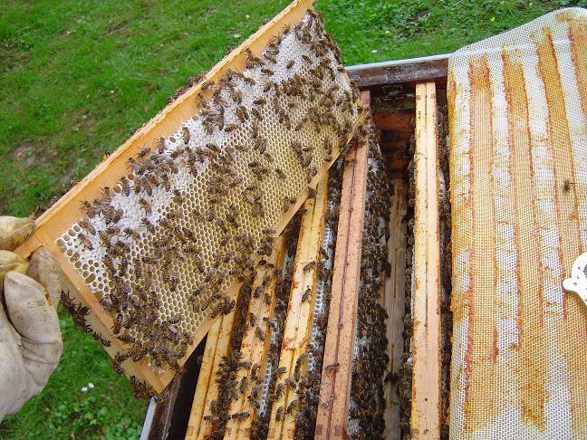 cadres de hausses abeilles ruche