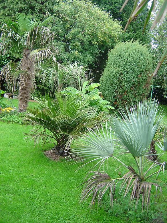 palmier, exotique, climat froid, Belgique