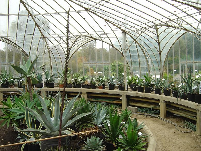 Collection agaves Jardin botanique national Meise