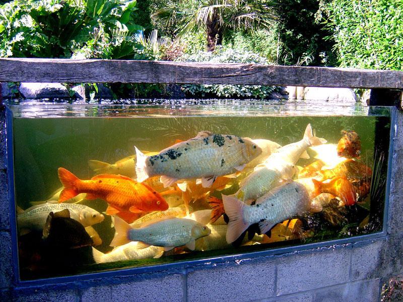 bassin étang jardin carpe koi polysester