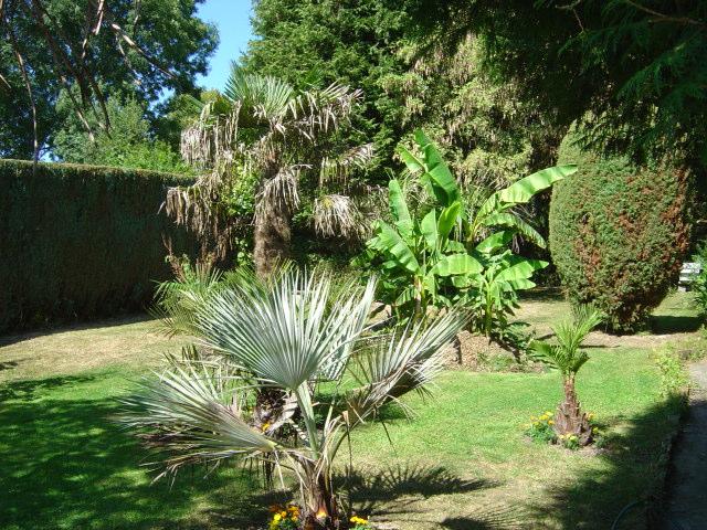 palmier, résistance, gel, exotique, climat froid,