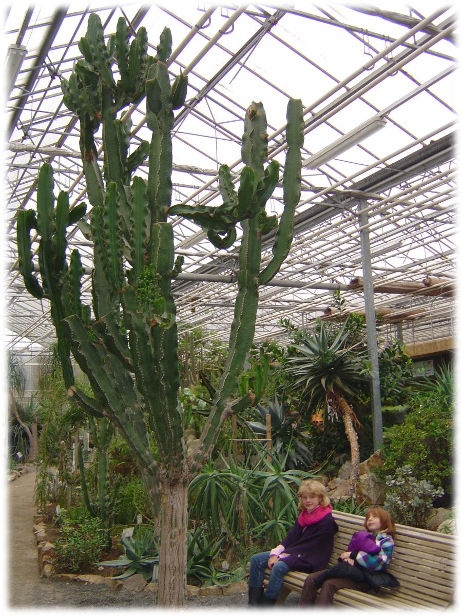 OMP observatoire monde plantes ULG université LiègeX serres jardin botanique