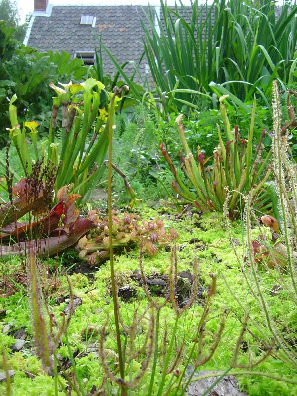 Plantes carnivores for Plante carnivore 01